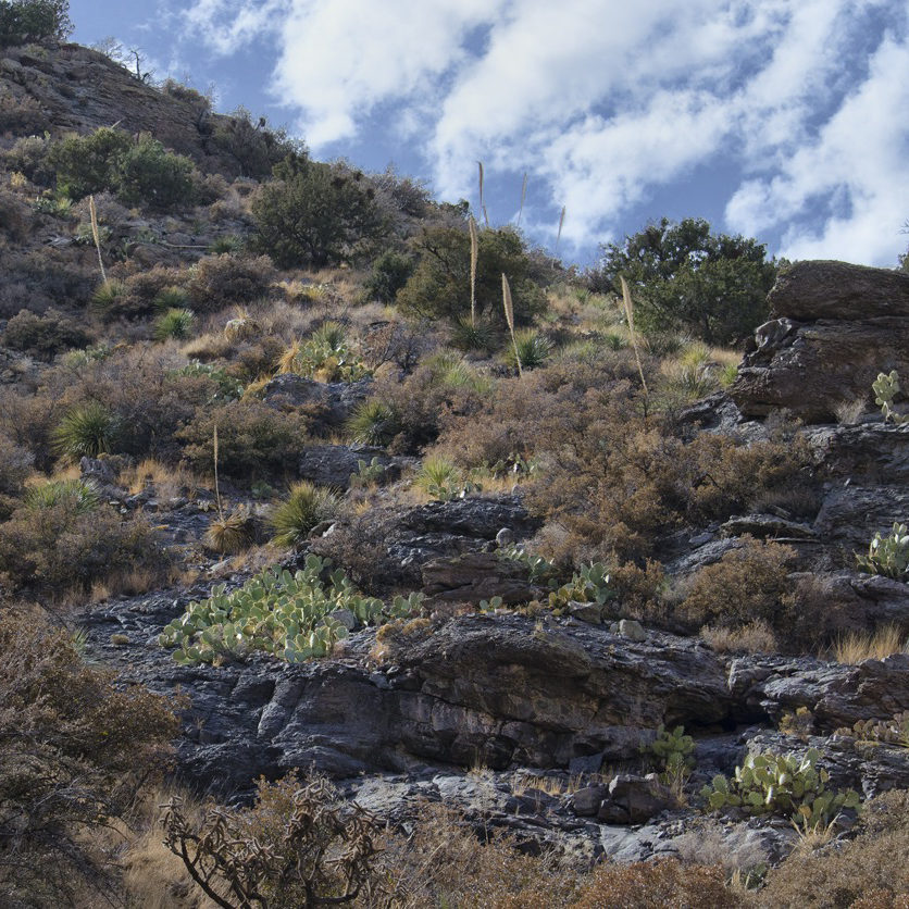 Spring_Canyon_Scenery_5595023779